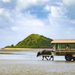 由布島のアクセスは水牛車だけじゃない。西表島から歩いて海を渡る。