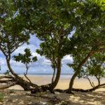 西表島の干潮時はマングローブの絶景が姿を見せる。