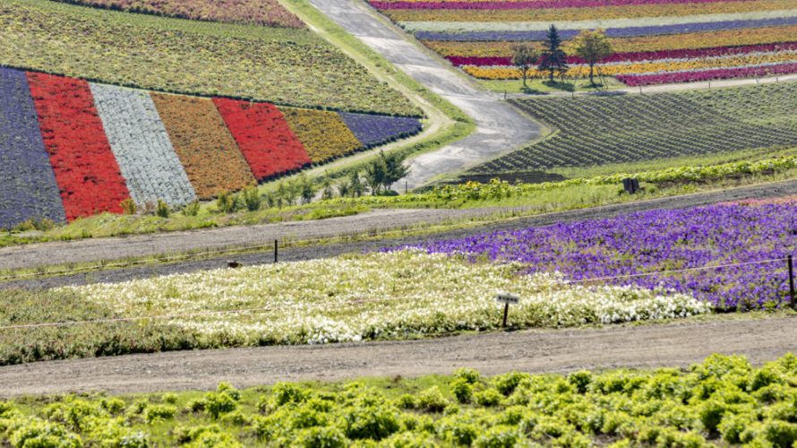 美瑛の人気スポット「四季彩の丘」は秋(9月)もオススメ。