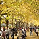 イチョウ並木・紅葉の名所 国営昭和記念公園に行ってみたら絶景が待っていました。(2018.11.17)