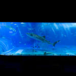美ら海水族館の巨大水槽で誰もいないジンベエザメを撮影するには?