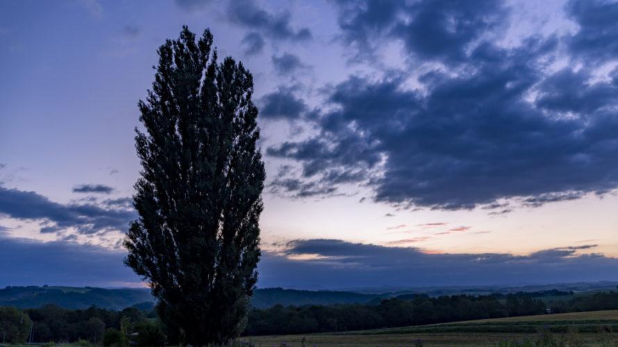 美瑛の日の出スポット「ケンとメリーの木」を紹介